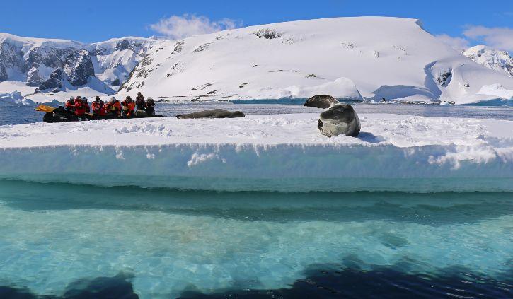 Seal on Iceberg with Zodiac resize