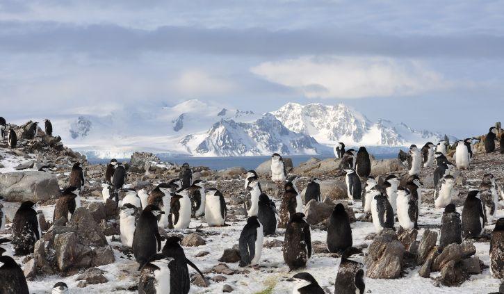 rachel penguins resize