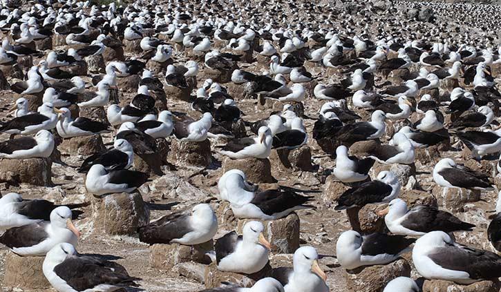 Falkland Islands Steeple Jason