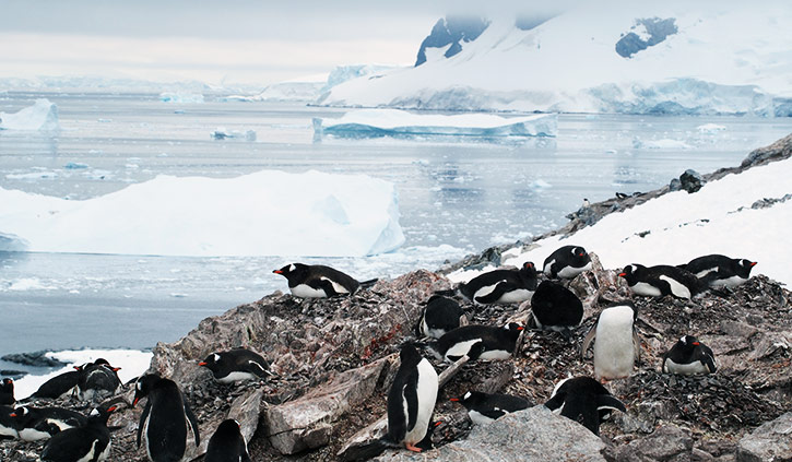 Penguins on Danco Island