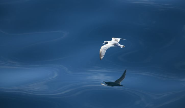 Bird at Sea